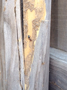 This poor piece of lumber was attacked by both termites AND carpenter ants!