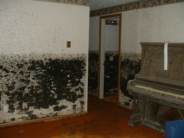 Notice the mold growing everywhere, even on the piano.